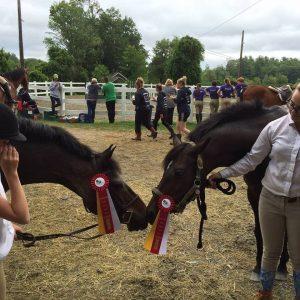 horses at horseshow