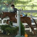 Cat 5 horseshowresized