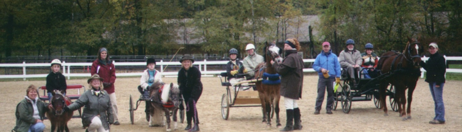 children carriage driving ponies