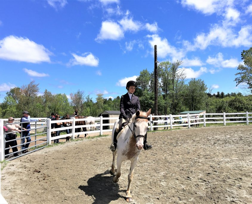 Touchstone | Horse Shows